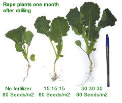 OSR Fertiliser Trials